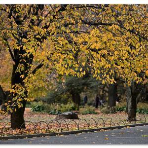 公園の桜の木