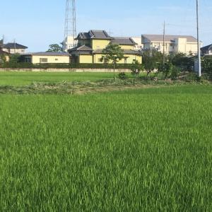 年間4回 除草剤散布 & 草刈り 茨城県 龍ケ崎市