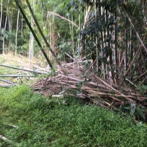 丸々2ヶ月 竹林の伐採を 再開する 千葉県 我孫子市