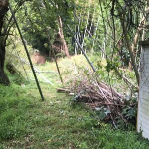 7日間に及んだ 竹林の伐採作業 完了 茨城県 取手市