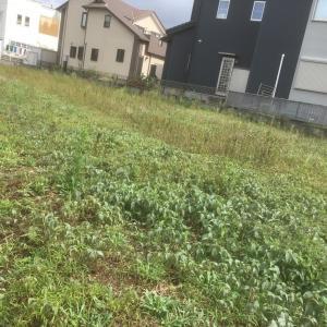 今シーズン最後の 除草剤散布 茨城県 利根町