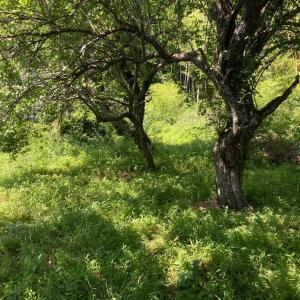 千葉県 我孫子市 夏の暑い日を狙って 除草作業