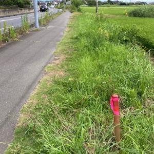 8月に入っても除草作業 千葉県 印西市