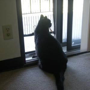 猫のライフスタイルを尊重した見返り