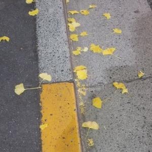 落ち葉って綺麗だ