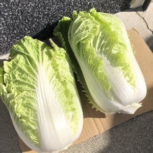 もらい物の白菜でキムチ・・