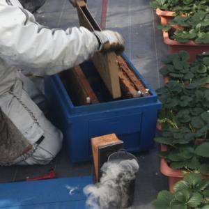 ミツバチの健康診断