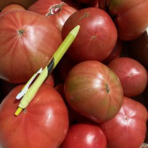 トマトのお礼はキタアカリ