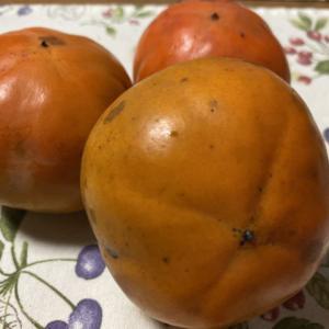 柿が採れました
