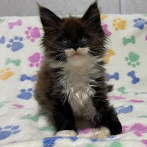 黒白猫シリーズ