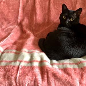 黒猫と秋の一週間
