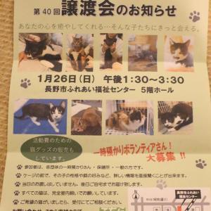 【こちら肉球クラブ主催】猫の譲渡会&猫グッズ販売のお知らせ 1/26(日)開催♪