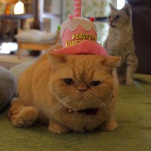 ちまきちゃんのお誕生日をのんびり開催中♪
