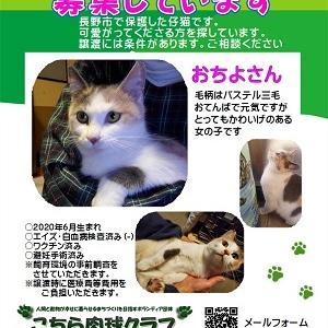 【こちら肉球クラブ】さんより猫の里親募集のお知らせです