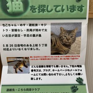 【猫を探しています!拡散希望】ちこちゃんを探しています!!