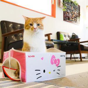 女子がいなくなった間にキティちゃんボックスにこっそり入ってみる新ちゃん