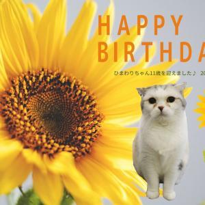 明日7月18日はひまわりちゃんのお誕生日♪ご来店の方にひまわりチョコ&ポストカードをプレゼント♪