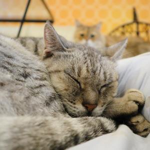 肌寒い1日だったのでくっつきモードの猫スタッフたちでした♪