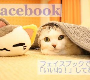 【こちら肉球クラブ】人と猫が共に暮らせるよう目指す長野県みらい基金のお知らせ