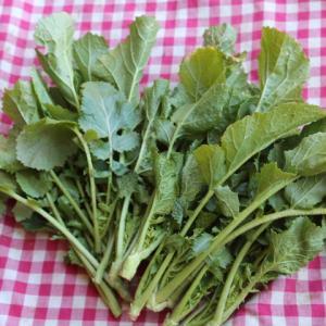 【2月3月が旬の葉物】2月4週目お届け野菜紹介。