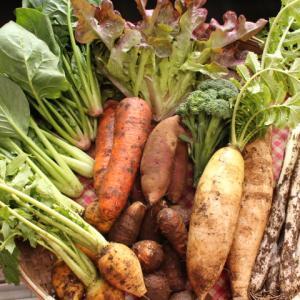 <お客様の感想>野菜が甘い!エネルギーたくさん頂きました★