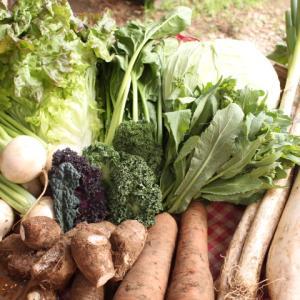 【 じゃが芋の定植、終わりました】3月4週目お届け野菜紹介