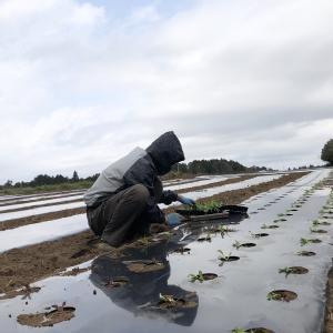 【 農作業は淡々と】4月2週目お届け野菜紹介