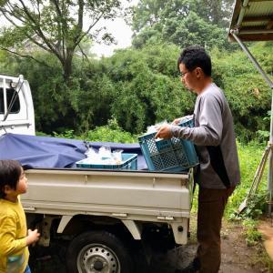 雨の日の出荷とお客様の洗練料理