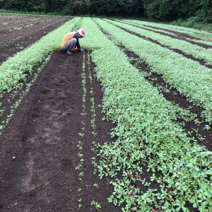 宅配発送と草取り、種まき