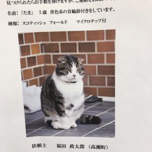 【シェア拡散希望】猫さんを探しています。