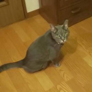 15歳、超高齢猫のプリンちゃんです。