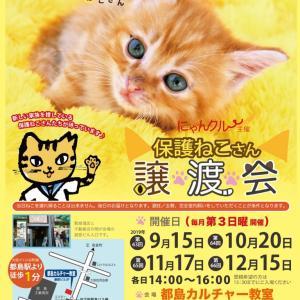 10月20日はにゃんクルー譲渡会です(*^^*)