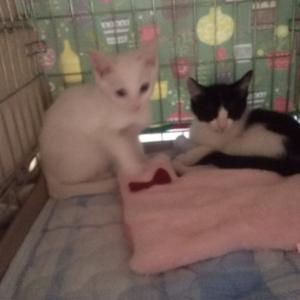 【緊急】またまた子猫が来ました、一時預かり様募集です❗️