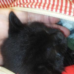 紙袋に入れて捨てられていた子猫(TT)