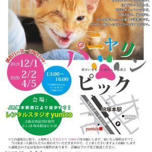 明日のパニャリンピック―障害猫さんの譲渡会、開催します。