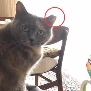 【シェア拡散希望】宝塚で猫を探しています。