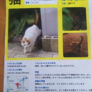【シェア拡散希望】大阪市城東区で猫を探しています。