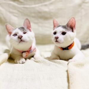 パニャリンピック参加予定の猫さんーアナ&エルザ