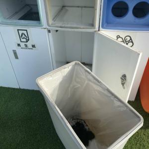 学校のゴミ箱に捨てられていたあかにゃん、その後