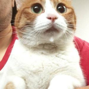 パニャリンピック参加予定の猫さんーやーちゃん、ふくちゃん