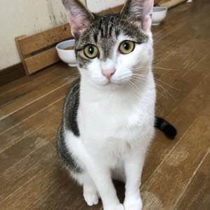 パニャリンピック参加予定の猫さんーヒカルくん