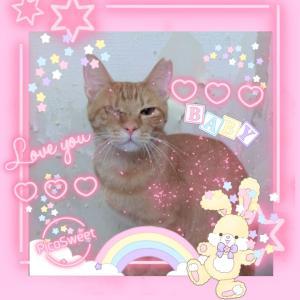 パニャリンピック参加予定の猫さんーぽぽちゃん