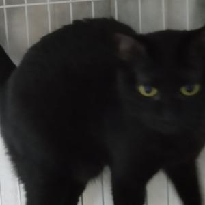 パニャリンピック参加予定の猫さんーももクロ