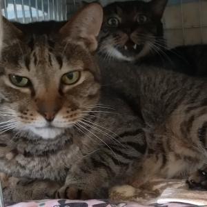 トニーは12番目に保護された猫さん