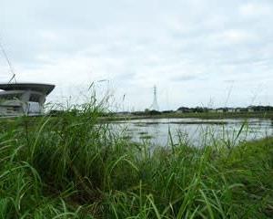 埼スタの調節池
