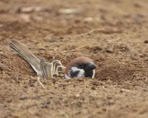 鳥には関係ねぇ!