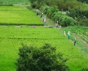 緑の中の案山子