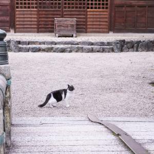 後ろを見る猫。