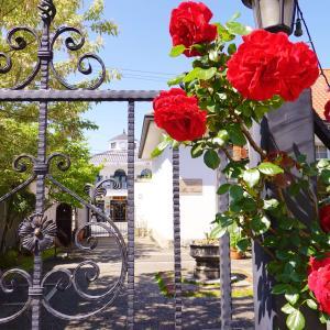旧山田郵便局電話分室の薔薇。