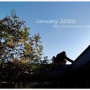 ■1月の「中庭」と「ヒメイワダレソウ」 -2020-